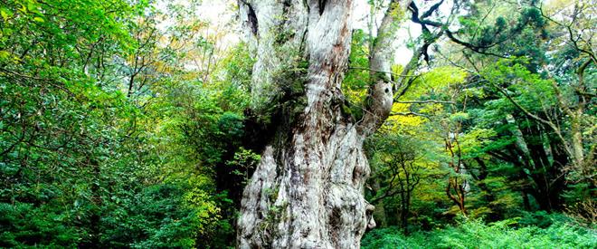 Phát hiện hang động hình trái tim ẩn mình trong khu rừng ngàn năm tuổi - 2
