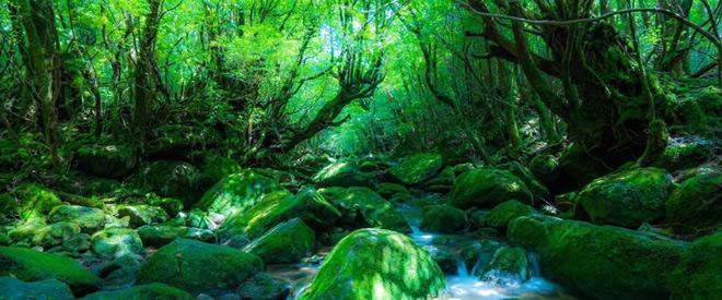 Phát hiện hang động hình trái tim ẩn mình trong khu rừng ngàn năm tuổi - 3