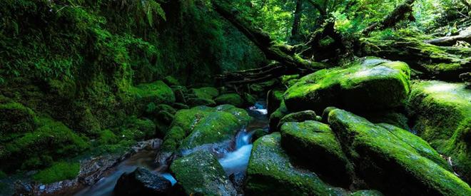 Phát hiện hang động hình trái tim ẩn mình trong khu rừng ngàn năm tuổi - 4