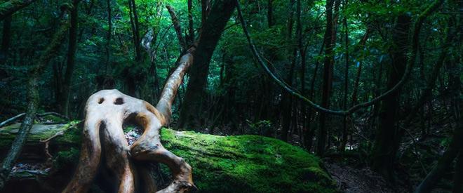 Phát hiện hang động hình trái tim ẩn mình trong khu rừng ngàn năm tuổi - 6
