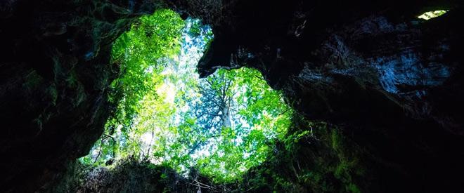 Phát hiện hang động hình trái tim ẩn mình trong khu rừng ngàn năm tuổi - 9