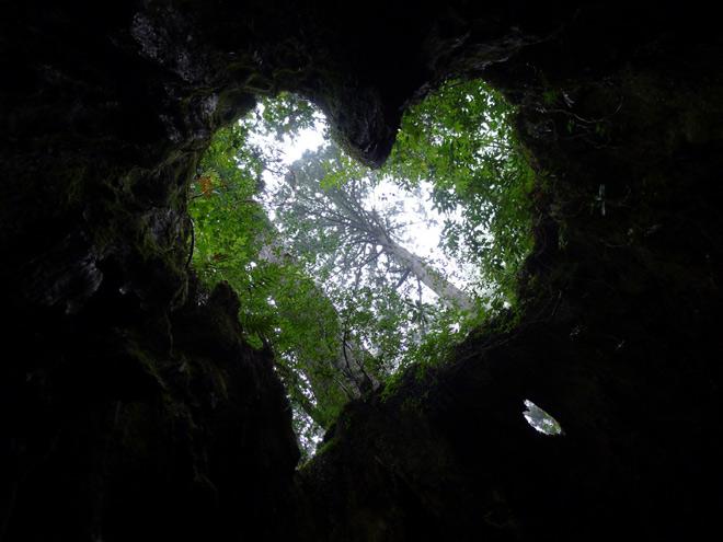 Phát hiện hang động hình trái tim ẩn mình trong khu rừng ngàn năm tuổi - 10