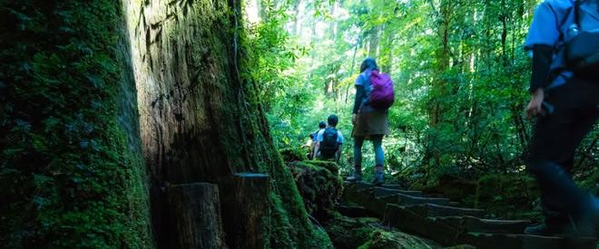 Phát hiện hang động hình trái tim ẩn mình trong khu rừng ngàn năm tuổi - 13
