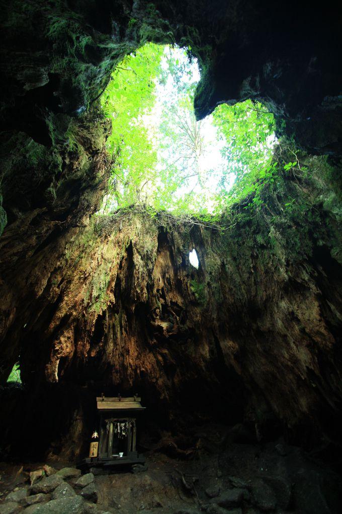 Phát hiện hang động hình trái tim ẩn mình trong khu rừng ngàn năm tuổi - 14