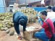 Gia Lai: Bắt quả tang cơ sở dùng phân bón lá nhúng sầu riêng