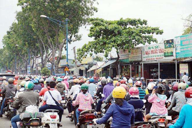 """Xóa sổ """"chợ"""" sinh vật cảnh lớn nhất SG, giao thông tê liệt từ sáng đến trưa - 5"""