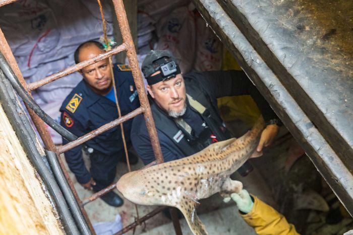 """Hàng ngàn cá mập chất đống như """"phim kinh dị"""" trong tàu TQ - 3"""