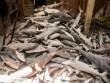 """Hàng ngàn cá mập chất đống như """"phim kinh dị"""" trong tàu TQ"""