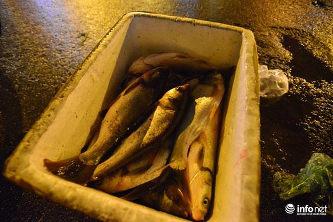 Người Hà Nội đổ xô bắt cá dưới sông Tô Lịch sau cơn mưa lớn - 3