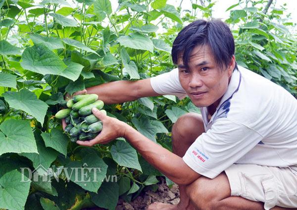 """Cách trồng hay: Đất mặn """"khó nhằn"""", rau màu vẫn xanh, kiếm nhanh 200 triệu - 1"""