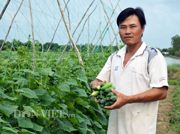 """Cách trồng hay: Đất mặn """"khó nhằn"""", rau màu vẫn xanh, kiếm nhanh 200 triệu - 3"""