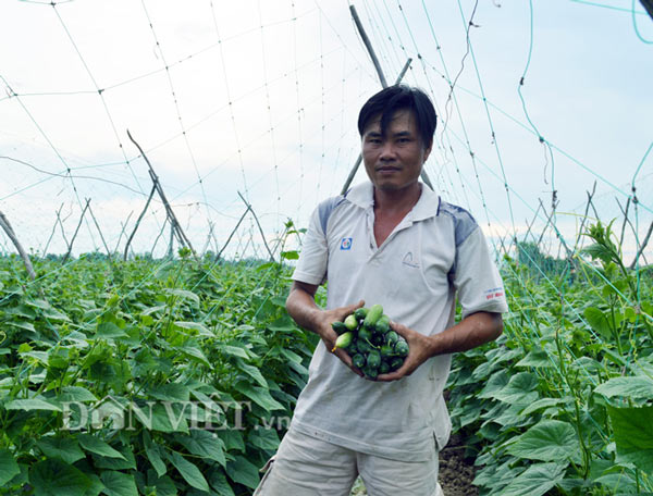 """Cách trồng hay: Đất mặn """"khó nhằn"""", rau màu vẫn xanh, kiếm nhanh 200 triệu - 4"""