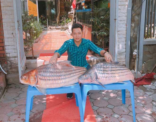 Cặp cá trà sóc nặng gần 1 tạ bắt từ Campuchia đưa về Hà Nội - 1