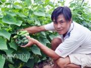 """Thị trường - Tiêu dùng - Cách trồng hay: Đất mặn """"khó nhằn"""", rau màu vẫn xanh, kiếm nhanh 200 triệu"""