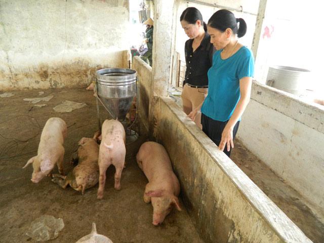 Lợn chết như ngả rạ sau bão, giá lợn miền Trung sẽ tăng? - 3