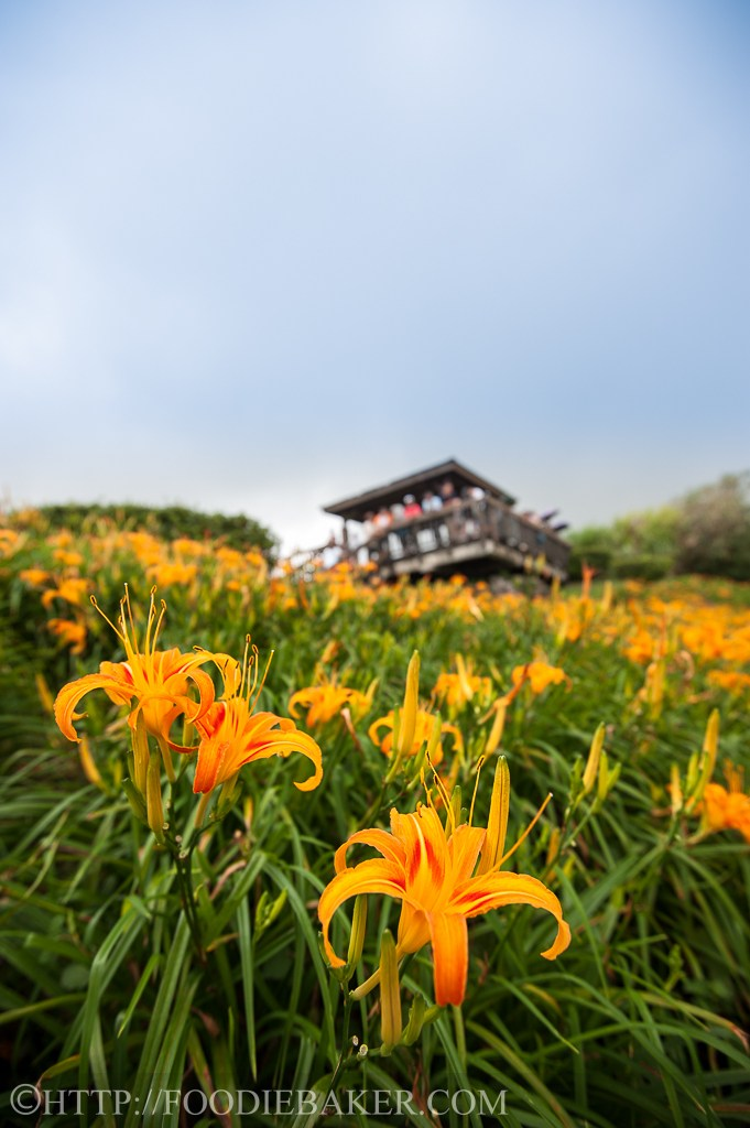 Choáng ngợp lễ hội hoa lily lớn nhất hành tinh - 9