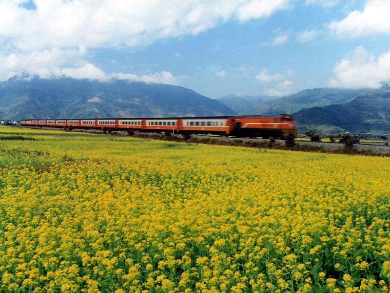 Choáng ngợp lễ hội hoa lily lớn nhất hành tinh - 10