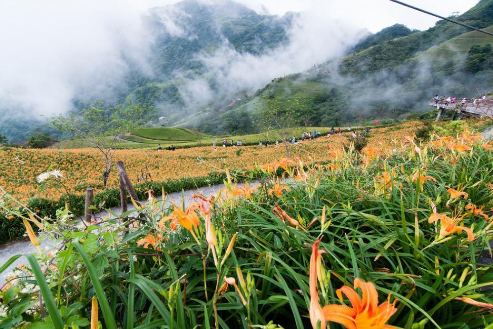 Choáng ngợp lễ hội hoa lily lớn nhất hành tinh - 12