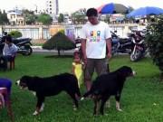 Biến chó dữ thành… thú cưng: Hiểm họa khôn lường