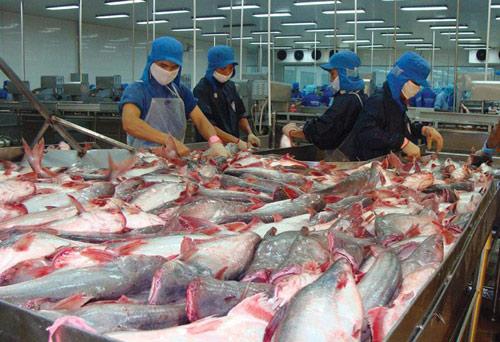 """30 năm phát triển, xuất khẩu 2 tỷ USD, cá tra Việt vẫn """"vô danh"""" - 1"""