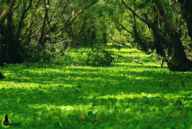 Mùa này về miền Tây ghé rừng tràm Trà Sư là nhất - 7