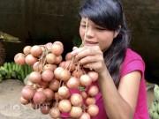 Ứa nước miếng trái cóp rừng khoái khẩu chua ê răng của người Kor