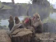 """Đột nhập """"vương quốc"""" khỉ mặt đỏ, tròn mắt xem khỉ tắm"""