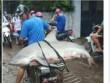 """Nóng 24h qua: Cá mập """"khủng"""" mắc câu ở Hạ Long và cái kết"""