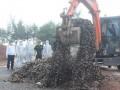Quảng Ninh: Tiêu hủy 10 tấn hàu giống nhập lậu từ Trung Quốc