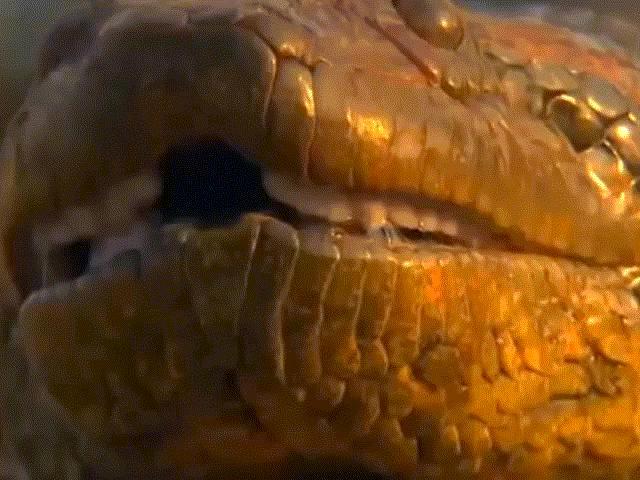 """Rùng mình 5 """"quái thú"""" khổng lồ nhất hành tinh"""