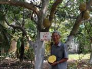 Thị trường - Tiêu dùng - Làm giàu ở nông thôn: Chỉ trồng 100 cây mít không hạt, thu 1 tỷ/năm