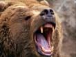 Nga: Gấu dữ mò vào làng, vồ trẻ em giết trước mặt nhóm bạn