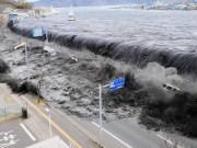 Sóng thần 2011 cuốn 1 triệu sinh vật từ Nhật Bản sang Mỹ