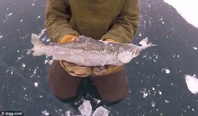 Cá lớn vừa đớp được cá bé thì nước đóng băng - 1