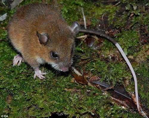 Nhiều động vật lạ ở Việt Nam được phát hiện - 10