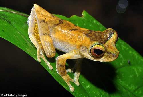 Nhiều động vật lạ ở Việt Nam được phát hiện - 12