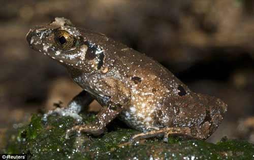 Nhiều động vật lạ ở Việt Nam được phát hiện - 2