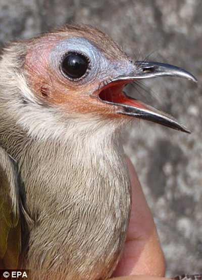 Nhiều động vật lạ ở Việt Nam được phát hiện - 14