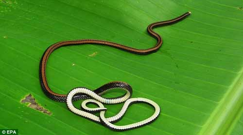 Nhiều động vật lạ ở Việt Nam được phát hiện - 4