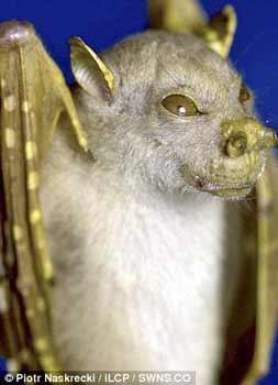 Nhiều động vật lạ ở Việt Nam được phát hiện - 7
