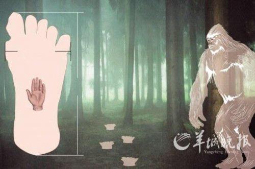 """""""Người rừng"""" gây xôn xao dư luận Trung Quốc - 4"""