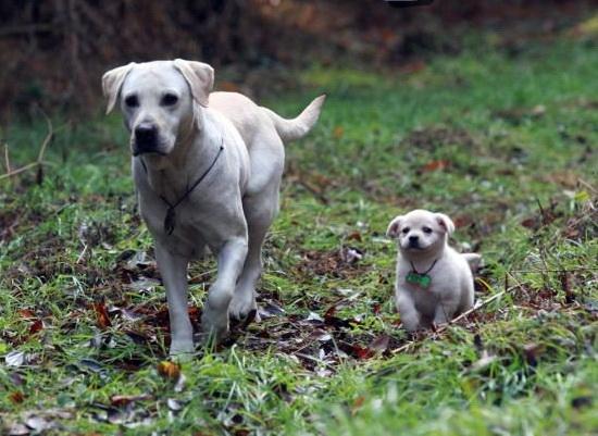 Cuộc phiêu lưu kỳ thú của cún con siêu quậy - 11