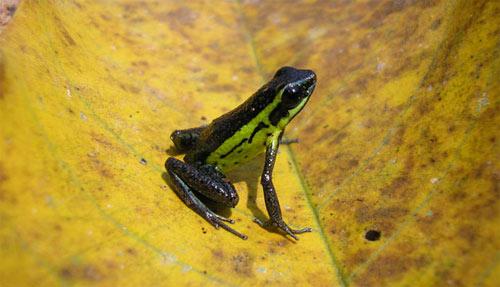 Phát hiện 1.200 loài sinh vật mới tại rừng Amazon - 1