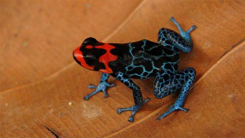 Phát hiện 1.200 loài sinh vật mới tại rừng Amazon - 2