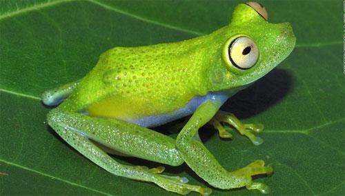 Phát hiện 1.200 loài sinh vật mới tại rừng Amazon - 3