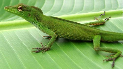 Phát hiện 1.200 loài sinh vật mới tại rừng Amazon - 4