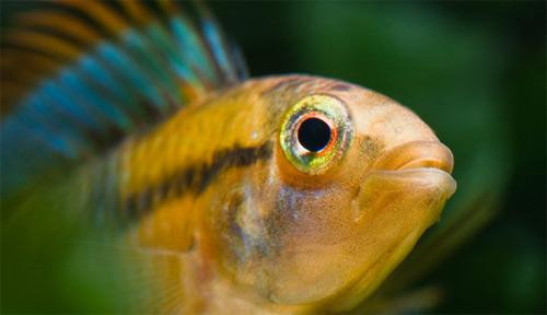 Phát hiện 1.200 loài sinh vật mới tại rừng Amazon - 7