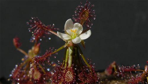 Phát hiện 1.200 loài sinh vật mới tại rừng Amazon - 10