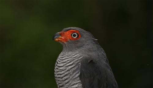 Phát hiện 1.200 loài sinh vật mới tại rừng Amazon - 11