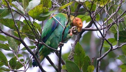 Phát hiện 1.200 loài sinh vật mới tại rừng Amazon - 12